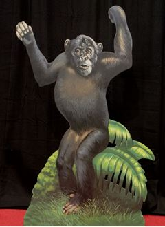 Picture of Cutout Chimpanzee