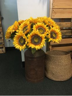 Picture of Sunflowers in Milk churn